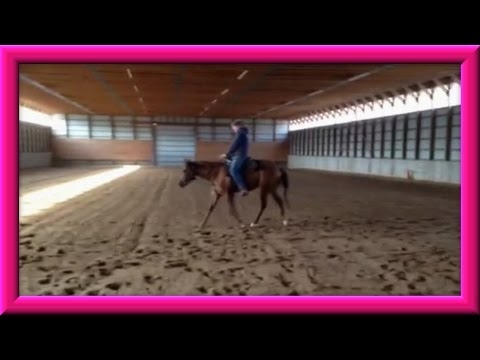 Update: On The Colt Being Born Video From April 2013