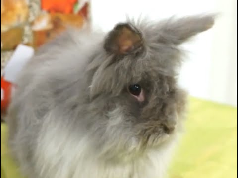 RABBITS - What is better, male or female?