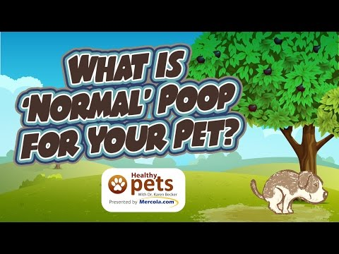 What Is 'Normal Poop' for Your Pet?