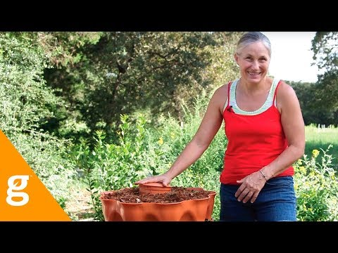 Protecting Plants & Worm Bins From Fire Ants:  Homesteading Basics