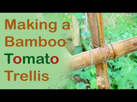 Making a Bamboo Tomato Trellis (Day 21 of 30)