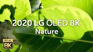 2020 LG OLED 8K l  Nature 8K HDR 60fps