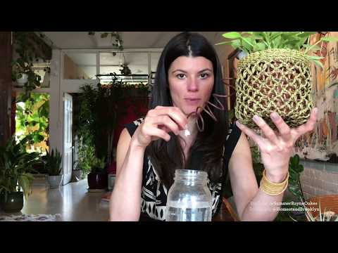 Ep 016: Plant One On Me: Cool watering hacks for houseplants
