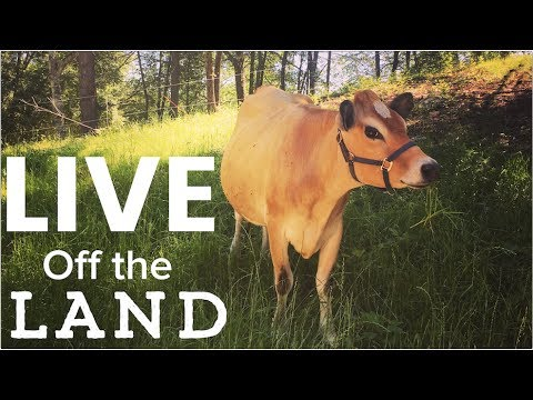 Living off the Land - Feed Your family from Your homestead