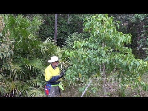 GAP BEACH - rainforest gully restoration.