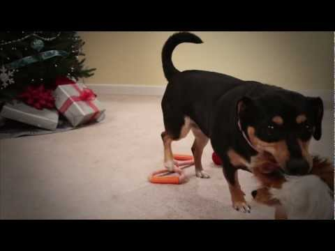 How to choose great gifts for your pet