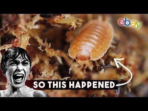 So I bought Giant Orange Isopods on eBay...