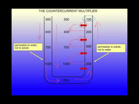 Demystifying the Countercurrent Multiplier