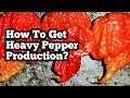 How To Get Heavy Pepper Production