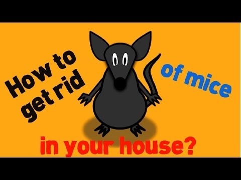 How to Get Rid of Mice in Your House Fast and Naturally?