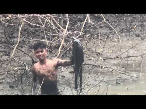 Catching Fish In Mud Water Pond