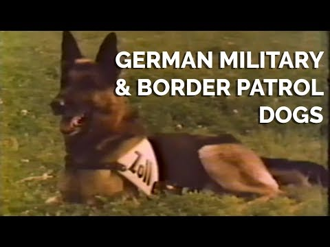 German Military & Border Patrol Dogs