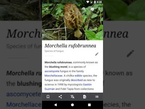 Wikipedia for Android Offline Demo