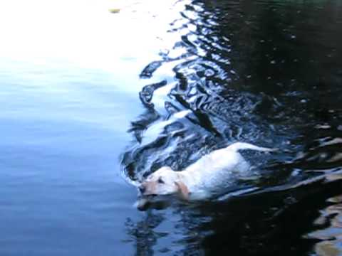 Who taught my dog how to swim?