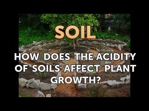 How Does the Acidity of Soils Affect Plant Growth?