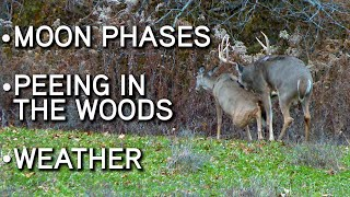 Deer Hunting MYTHS And FACTS!!   Moon Phases   Peeing In The Woods   Weather