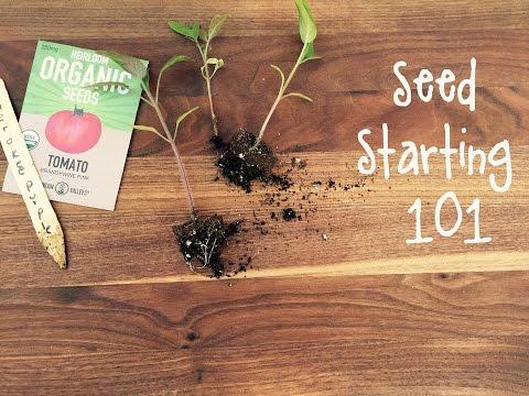 How-To Start Seeds for a Vegetable Garden | IN BETH'S GARDEN