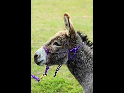 Donkey Rope Halter and Lead Line