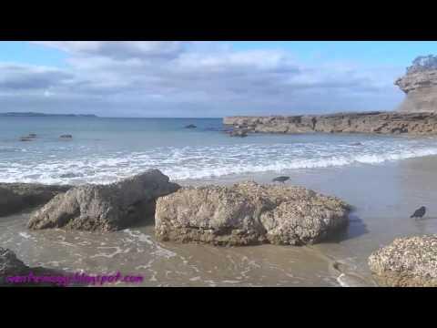 Auckland Nuova Zelanda - Omaha e altre meraviglie Working holiday visa