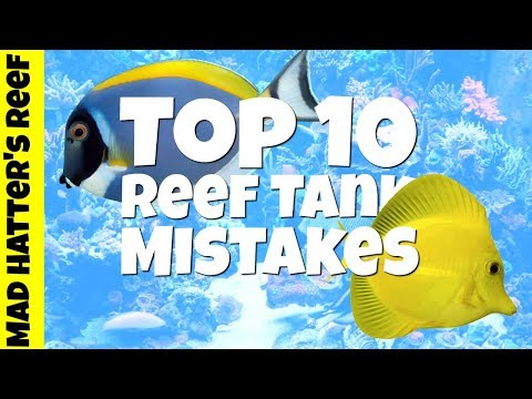 Top 10 Reef Tank Mistakes