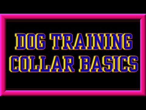 Dog Training Collar Basics