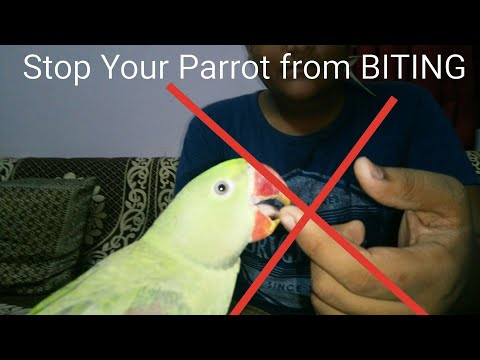 Training your Parrot NOT TO BITE || HINDI