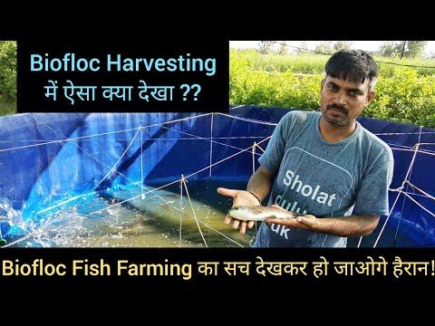 Kya kehte Hain kisaan BioFloc fish farming ki training ke