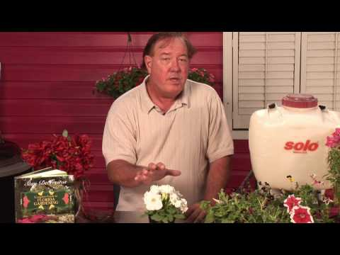 Flower & Plant Care : How Do Plants Get Energy From Sunlight?