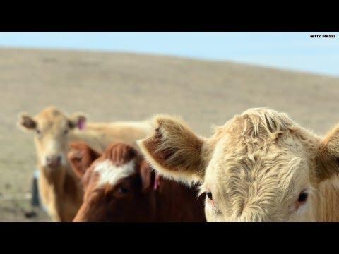 Video rewind: April 16, 1996 -- Oprah 'has a cow'