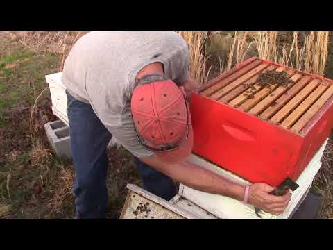 Late Winter Hive Inspection