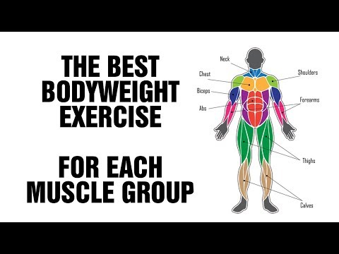 Best Bodyweight Exercise For Each Muscle Group - Calisthenics - Sixpack Factory