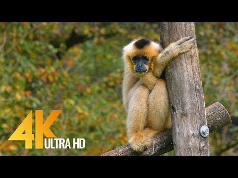 Wild Animals in Ljubliana ZOO in 4K UHD Quality - Trailer