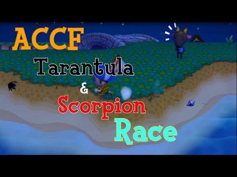 ACCF - Tarantula/Scorpion Race with my Brother