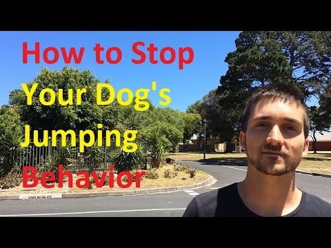How to Stop Your Dog's Jumping Behavior - Dog Training Nibbles Ep6