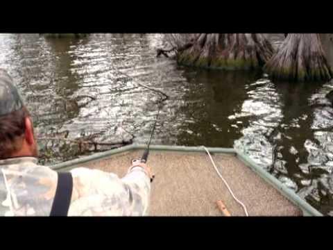 reelfoot lake fishing report guide call 731.446.5245  reelfoot lake fishing guide