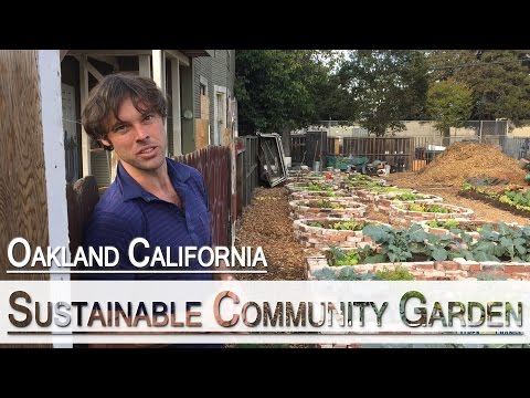How to Build a For Profit Community Garden in the City - Bottoms Up Community Garden