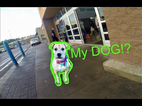 *CLICKBAIT* My Dog Went To Walmart