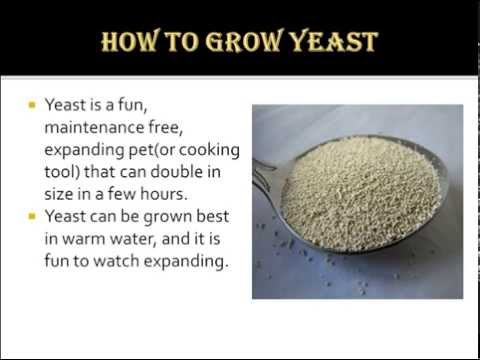 How to Grow Yeast
