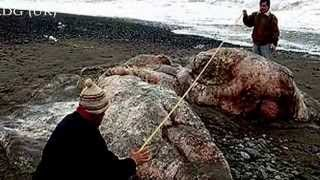 Extrañas criaturas aparecen en las playas - Strange creatures appear on the beaches