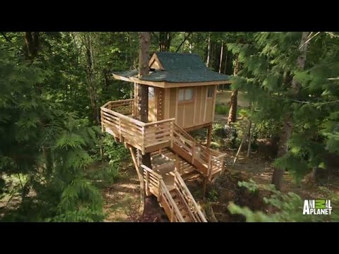 Behind the Build: Towering Treetop Teahouse | Treehouse Masters