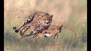 Fastest Creatures On Earth - Fastest Animals World | Predator (Nat Geo)