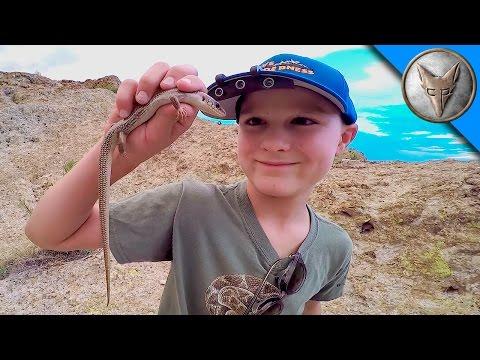 Exploring for Desert Animals!