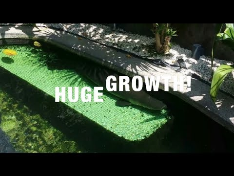 CRAZY Growth in POND!!!