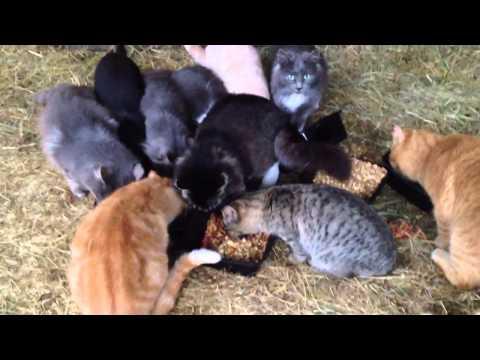 Feral cat colony takes over Nanoose farmer's barn