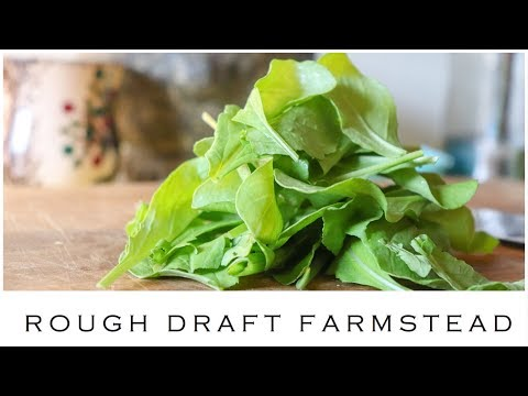 Arugula: From Farm to Table