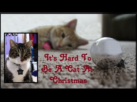 Hard To Be a Cat At Christmas-Grumpy Cat (Fan Made Music Video)