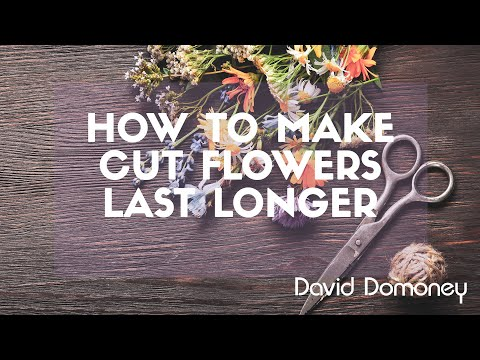 How To Make Cut Flowers Last Longer In The Vase