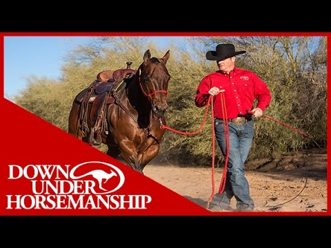 Clinton Anderson: Correct Halter Placement - Downunder Horsemanship