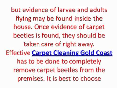 how to get rid of carpet beetles in my car how to repair. How Do I Get Rid Of Carpet Beetles In My Car   Best Ideas Carpet