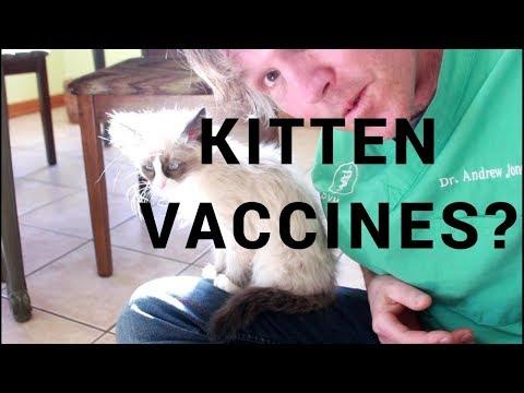 Are Kitten Vaccines Necessary?